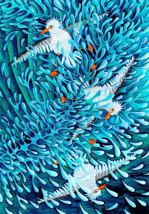 'Seagulls Don't Surf' By Nicky Stevenson