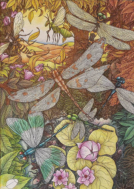 'Dragonfly Retreat' By Anne Clancy