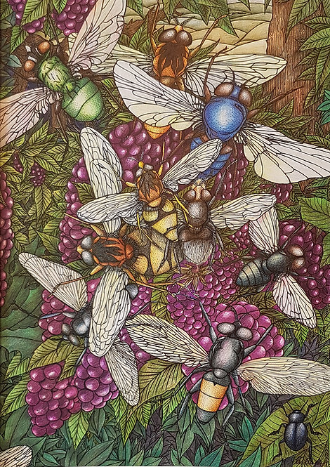 'Blueberry Fields' By Anne Clancy