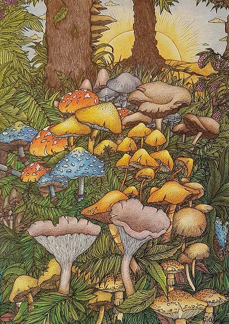 'Mushroom Sunrise' By Anne Clancy