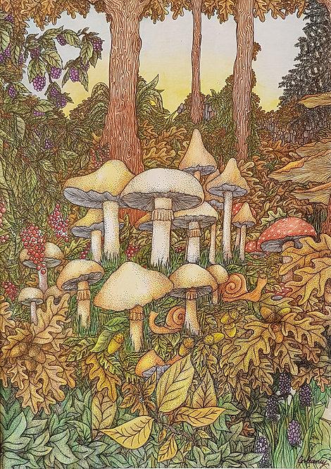 'Mushroom Sunset' By Anne Clancy