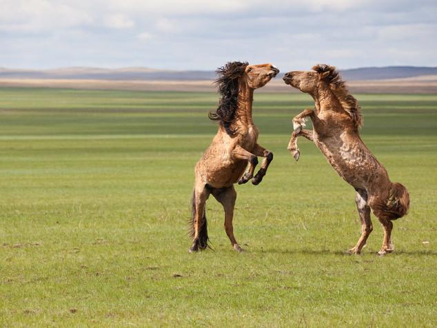 Kazakhstan: Where Horses Are Revered And Eaten