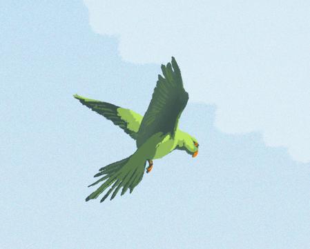 London Parakeet