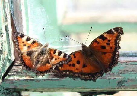 АВГУСТ на ПСКОВЩИНЕ. Это поля тронутые летней паутинкой, бабочки, бьющиеся в окно, луговые цветы, ко
