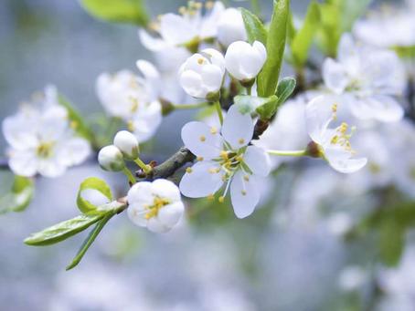 ВЕСНА СКОРО! Как приятно убежать на майские праздники в русскую провинцию и удивиться весне. Яркое с