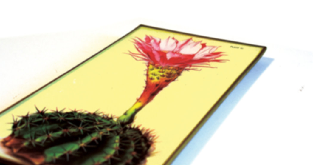Flowering Cacti Tray web.jpg
