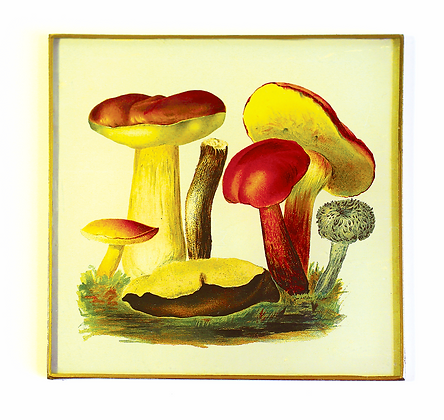 Wild Mushrooms Botantical Decoupage Wall Hanging