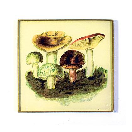 Wild Mushrooms 3 Decoupage Wall Hanging