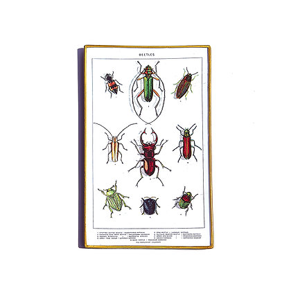 Beetles glass tray