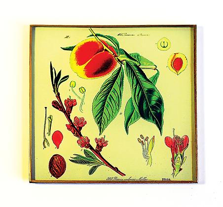 Peach  Botantical Decoupage Wall Hanging