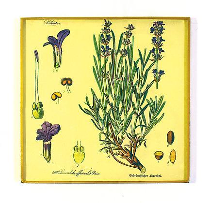 Lavender Botantical Decoupage Wall Hanging