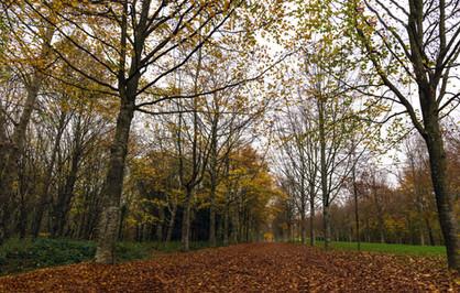 Fall at Versailles Park