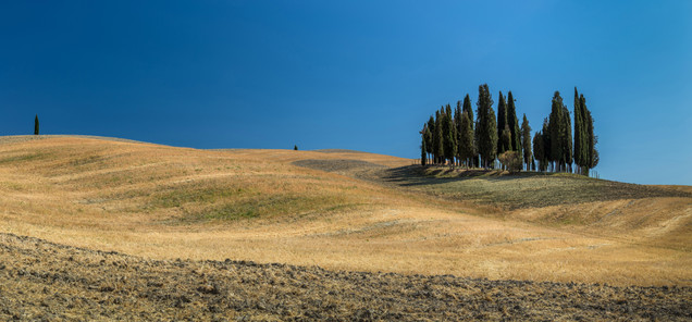 Famous Cypresses