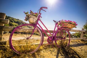 Bike for Kitty