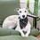 Thumbnail: Black Mud Cloth Doggy Bandana