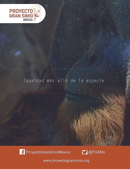 proyecto gran simio zanto
