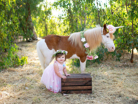 Alice Unicorn | Highlands Ranch Colorado