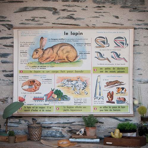 Affiche scolaire Rossignol le lapin - Gris Groseille concept-store déco vintage Angers 49