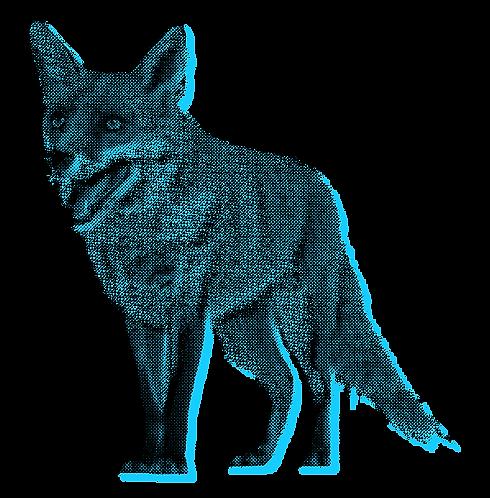 foxbitmap (1).png