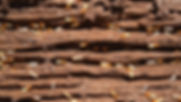 Termite Control Geelong