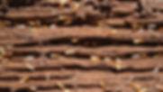 Termite Control Wyndham Vale