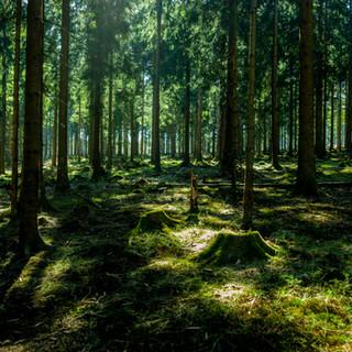 Traumhaft natürlich ist es im Wald. Hört Ihr die Bäume flüstern?