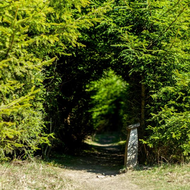 Eingang zum Hirschwald