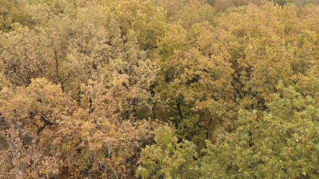 Flug über die Baumhäuser