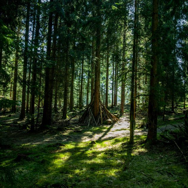 Waldzelte gibt´s hier überall.