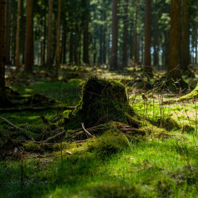 Das Moos des Waldes ist wie ein weicher Teppich.