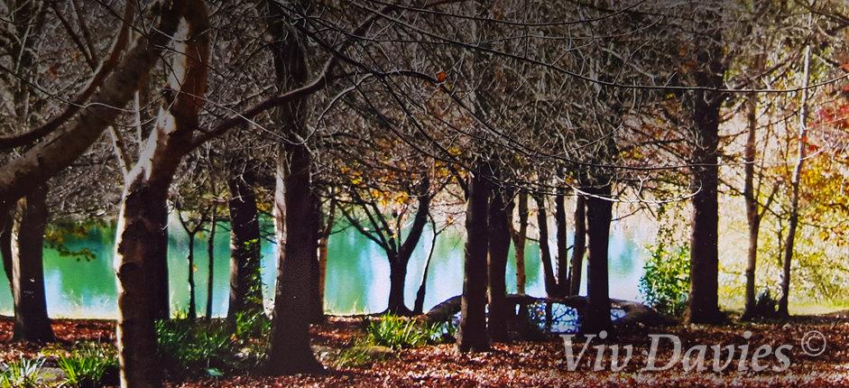 Viv Davies | Mental Health | Melbourne | Therapy
