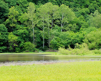 Big Pond 01.jpg