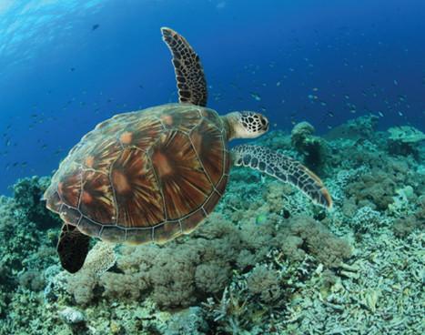 kalimantan_turtle_01jpg
