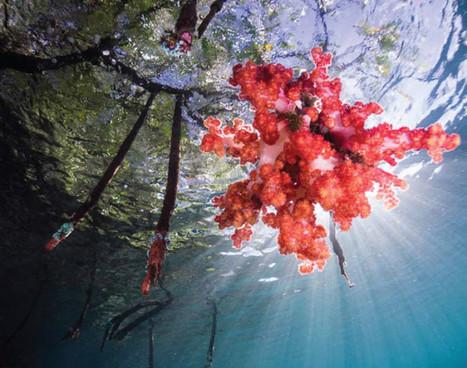 raja-ampat_blue-water-mangrove_01jpg
