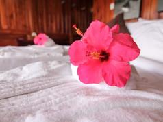 Linen & Hibiscus.jpg