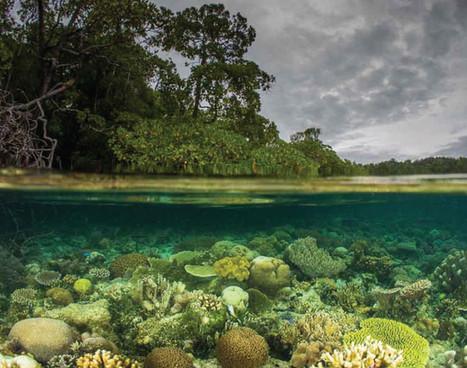 raja-ampat_blue-water-mangrove_03jpg
