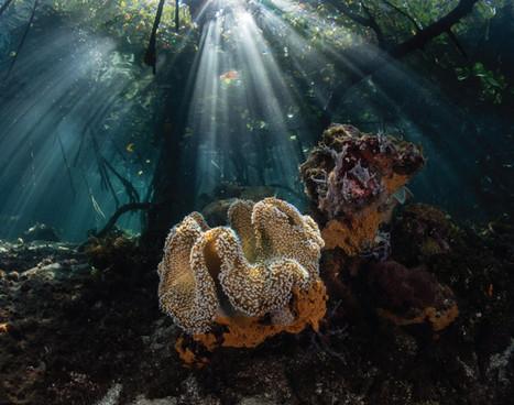 raja-ampat_blue-water-mangrove_02jpg