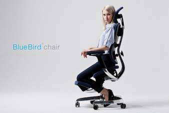BLUE BIRD HYBRID CHAIR