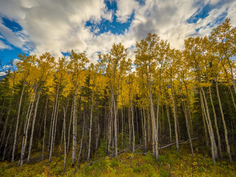 Thunderbird Falls trail-1430259-HDR.jpg
