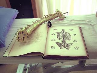 la formation de chiropraticien est dispensée à l'Institut Franco Européen à Paris et Toulouse, Centre chiropratique de Lille, chiropracteur Lille