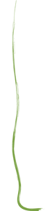 Squiggle line green.png