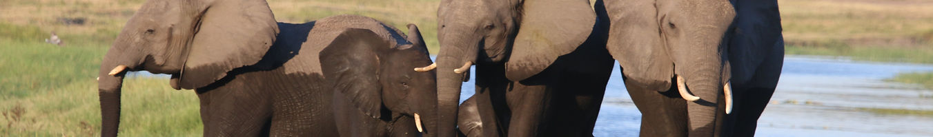 Elephants_in_Chobe.JPG