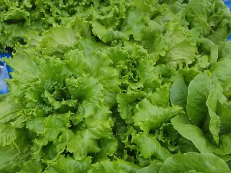 Fresh produce available despite heat wave