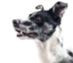 dog-407160.jpg