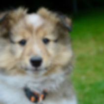 dog-2968534.jpg