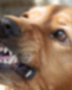 dog-329280.jpg