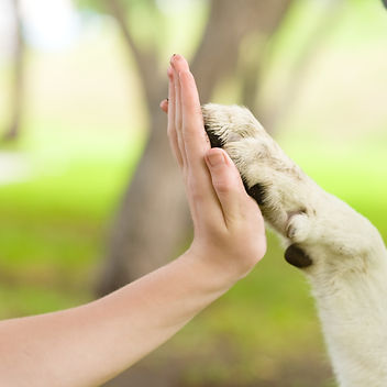 Give me five - Dog pressing his paw agai