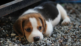 dog-2449668_1920.jpg
