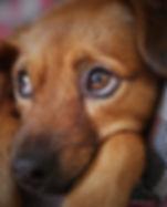 dog-3071334.jpg