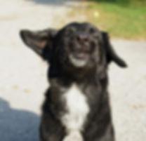 dog-1663335_1920.jpg